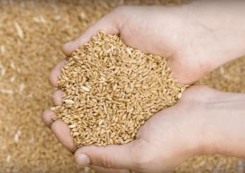 Лимец зърно